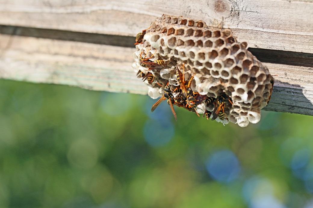 以外な所にハチの巣があるかもしれない
