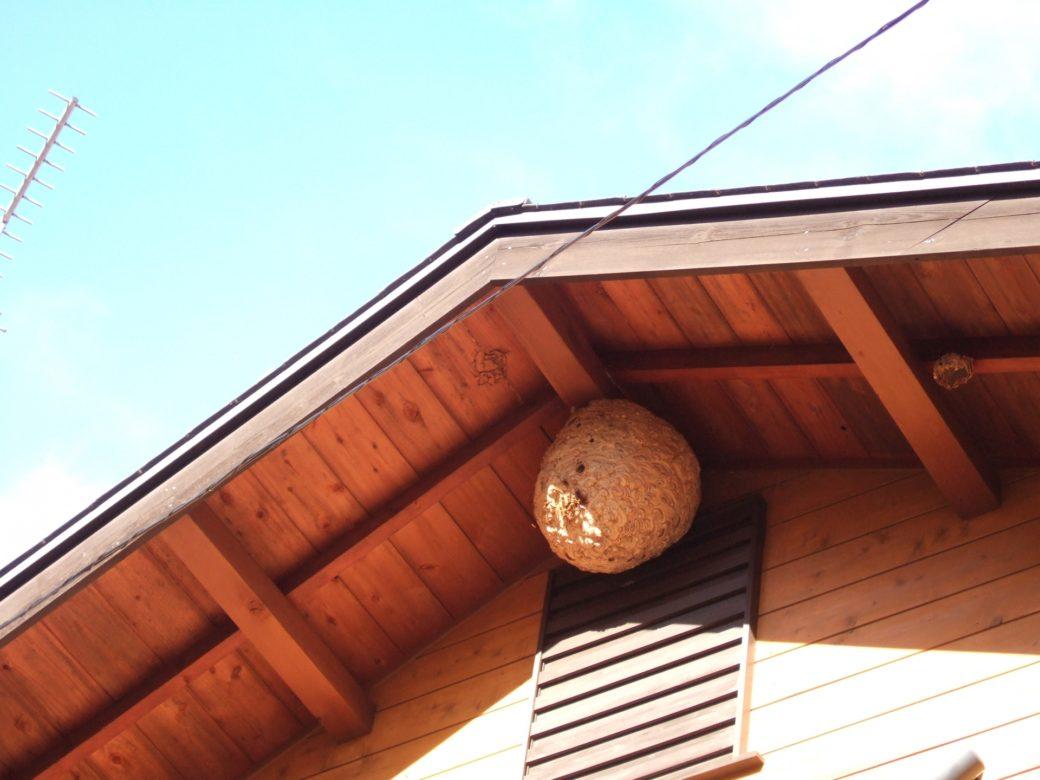 駆除の難しいスズメバチの巣
