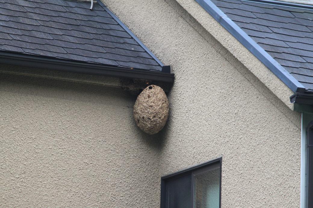ハチの巣の駆除は大変