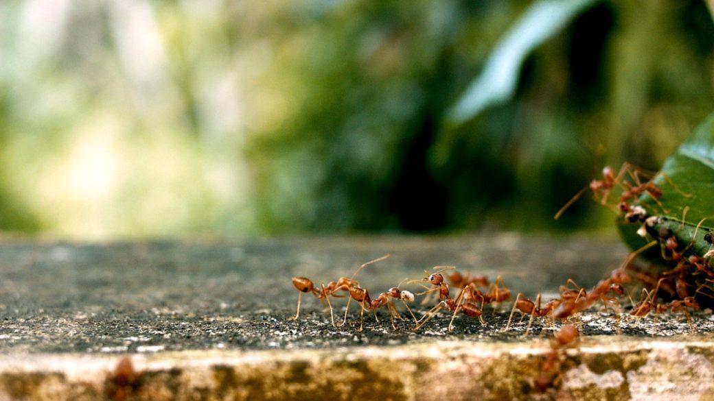 アリの種類は?