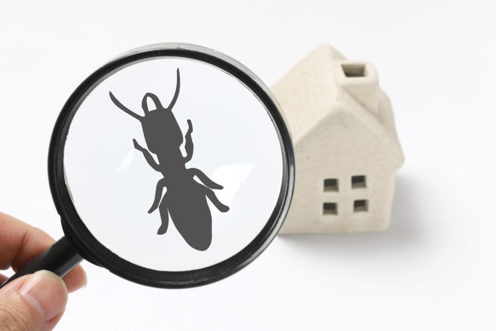 住宅のシロアリをチェックするイメージ