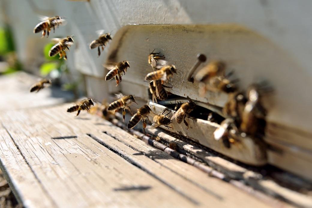 まずはハチの生態を知ろう