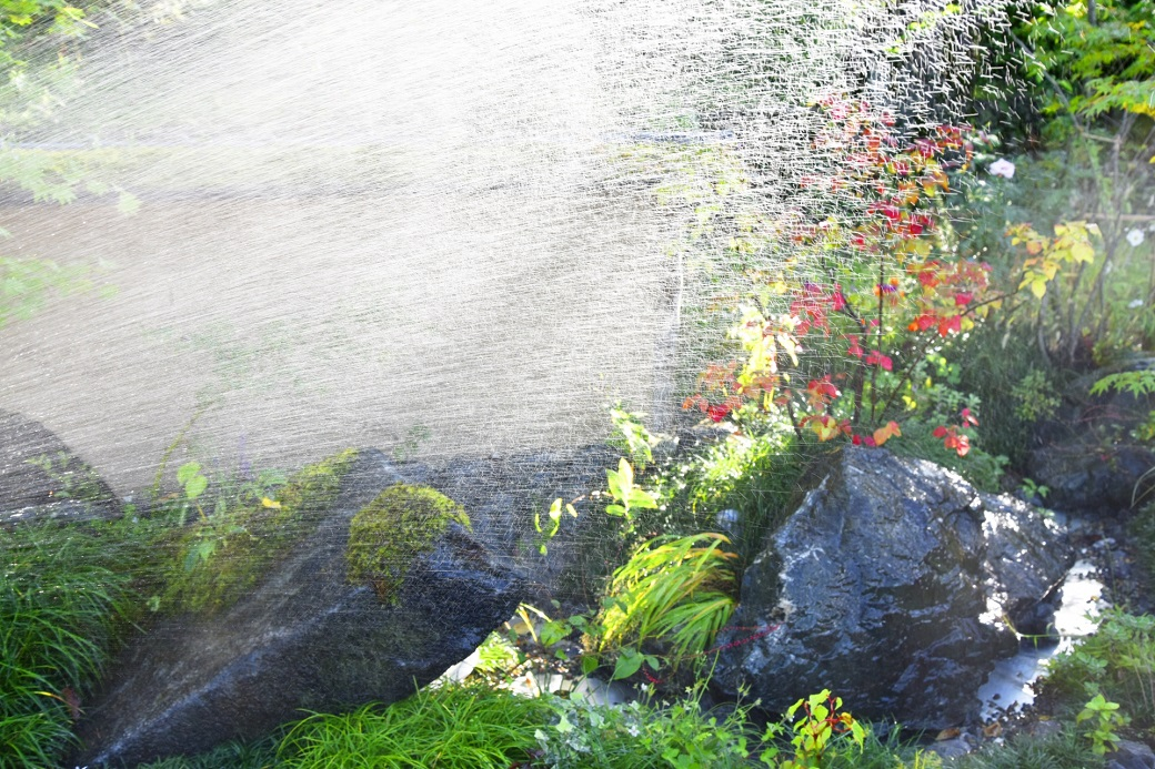 庭の水まき